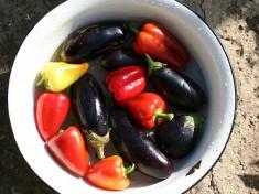 DasBild Datscha-Garten: Gemüsewurde bei flickr unter derCreative Commons LicensevonJuergVollmerveröffentlicht